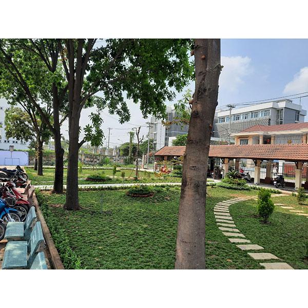 Trồng cỏ, cây bụi và chăm sóc bảo dưỡng UBND P. Thạnh Lộc, Quận 12