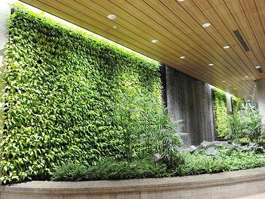 Xu hướng thiết kế cảnh quan với tường cây