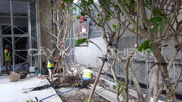 Dịch vụ thiết kế, thi công, trồng cây xanh tại công trình, nhà